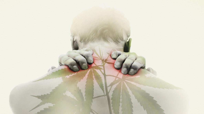"""图像搜索""""fibromialgia cannabis""""的结果"""